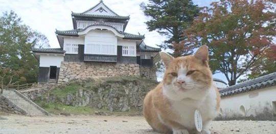 備中松山城猫城主